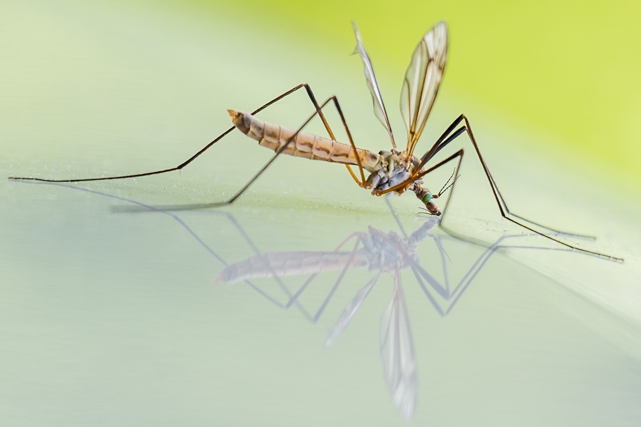 How to repel mosquitoes: natural remedies and artificial remedies